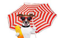 Sonnenschirm als Sonnenschutz